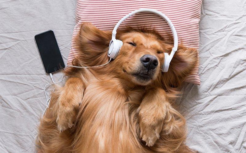 La musique aide-t-elle à mieux dormir ?